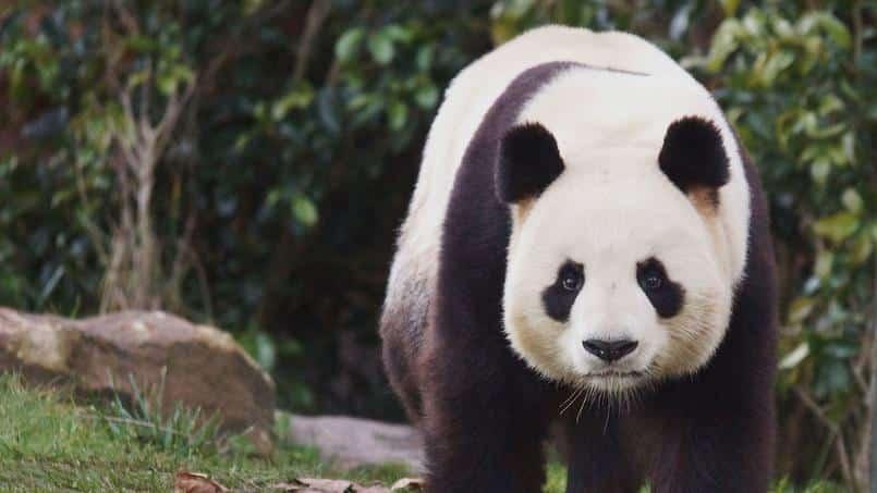 Les différents zoo a visiter en France